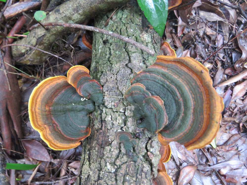 Rainbow fungi