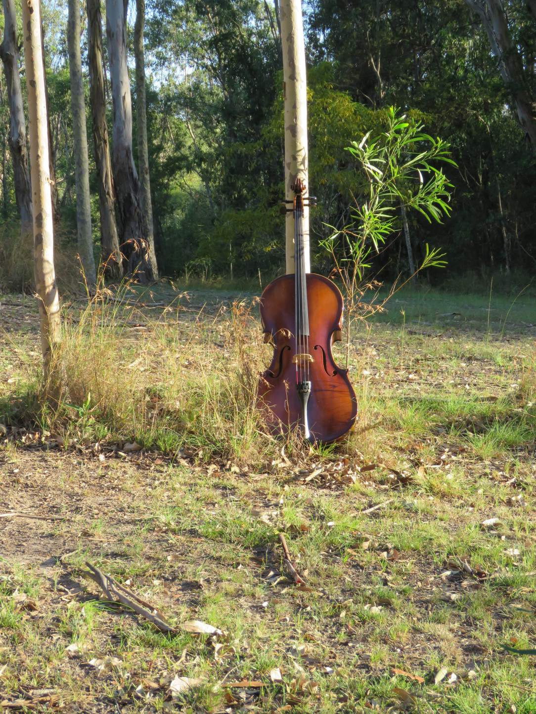 Cello in bush