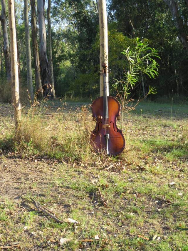 Cello in bush