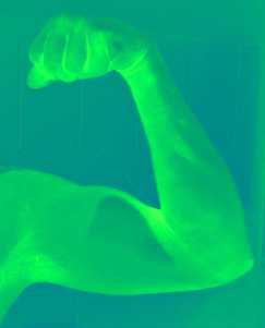 Green Muscle 1
